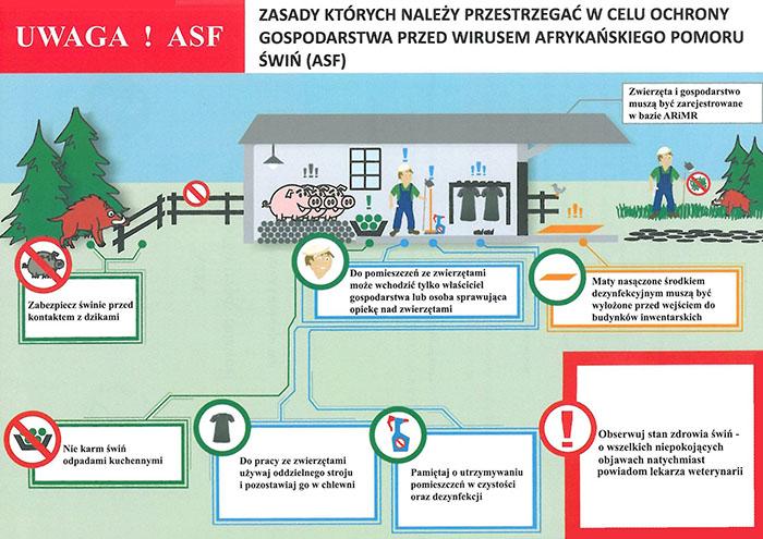 Ilustracja do informacji: Afrykański pomór świń (ASF) w województwie lubuskim