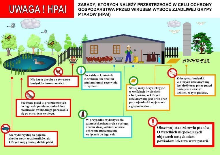 Ilustracja do informacji: Ptasia grypa - zasady ochrony drobiu przed chorobą.